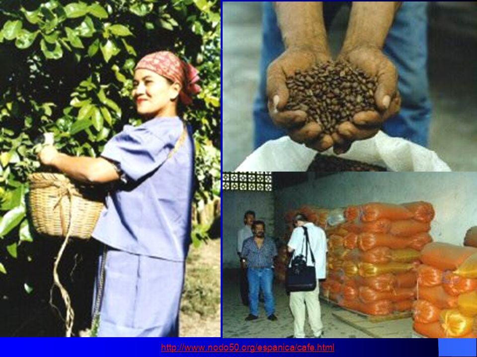 http://www.nodo50.org/espanica/cafe.html