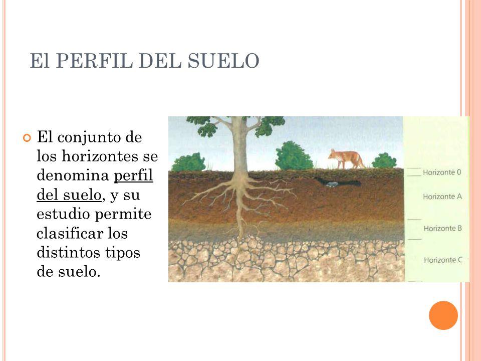 Bonito tipos de suelo colecci n ideas de decoraci n de for Perfil del suelo wikipedia