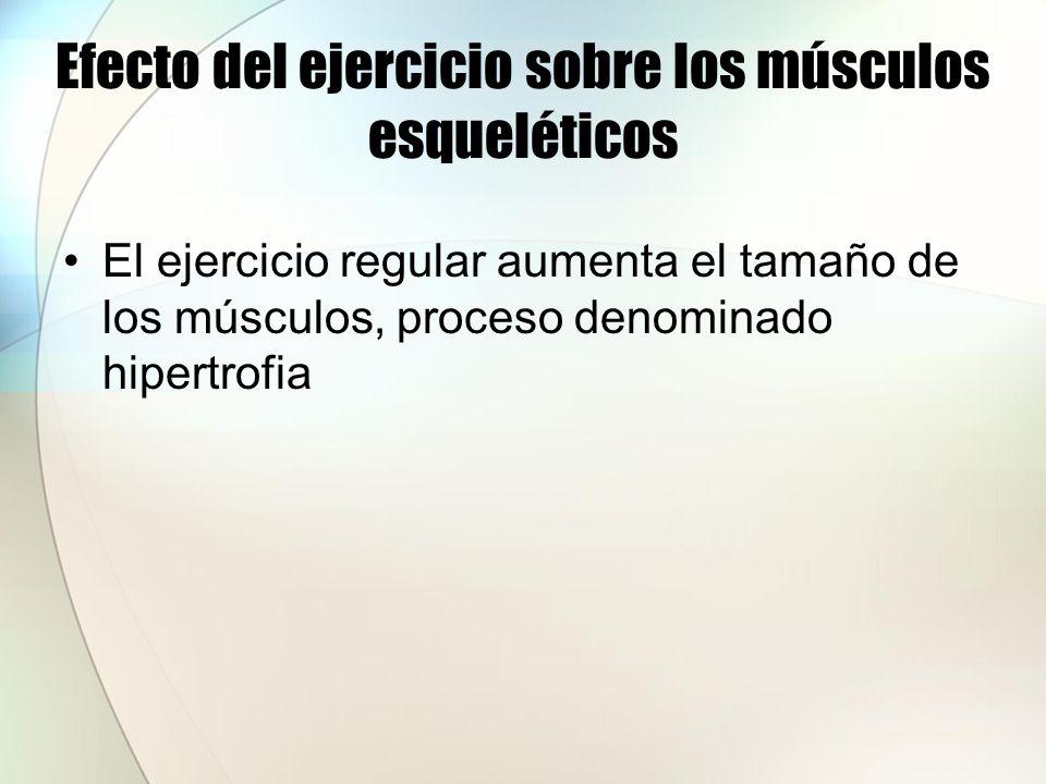 Efecto del ejercicio sobre los músculos esqueléticos