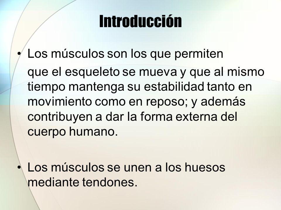 Introducción Los músculos son los que permiten