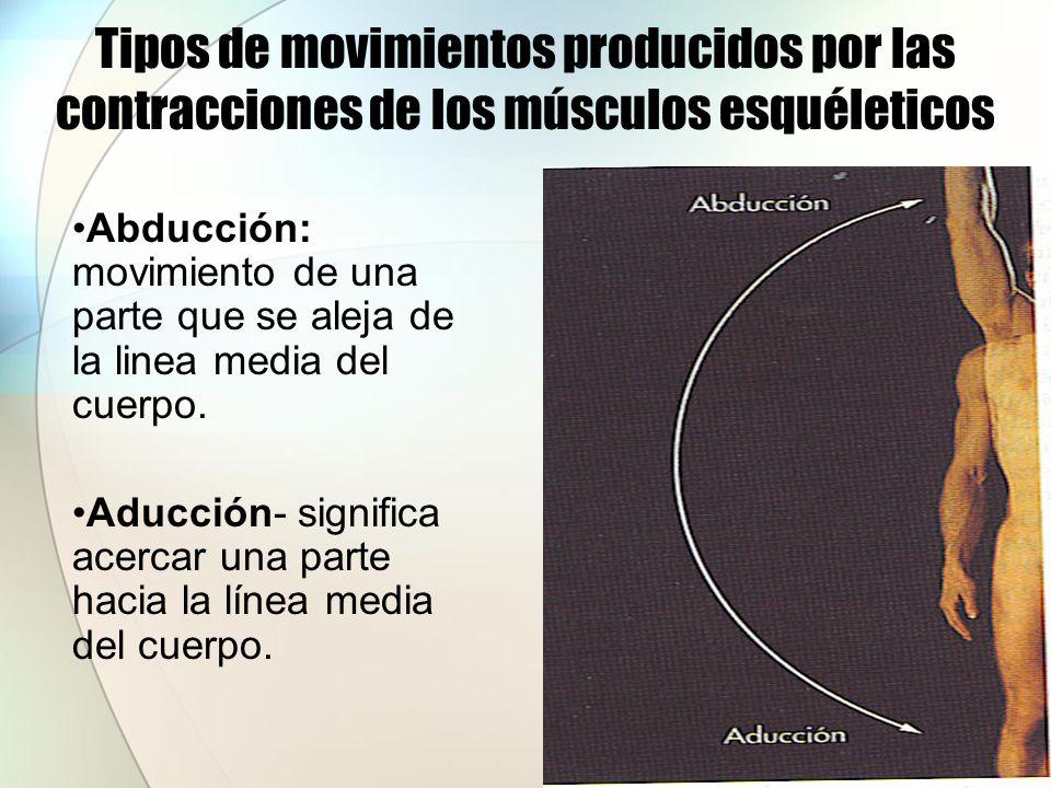 Tipos de movimientos producidos por las contracciones de los músculos esquéleticos