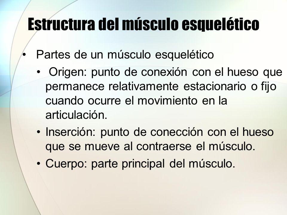 Estructura del músculo esquelético