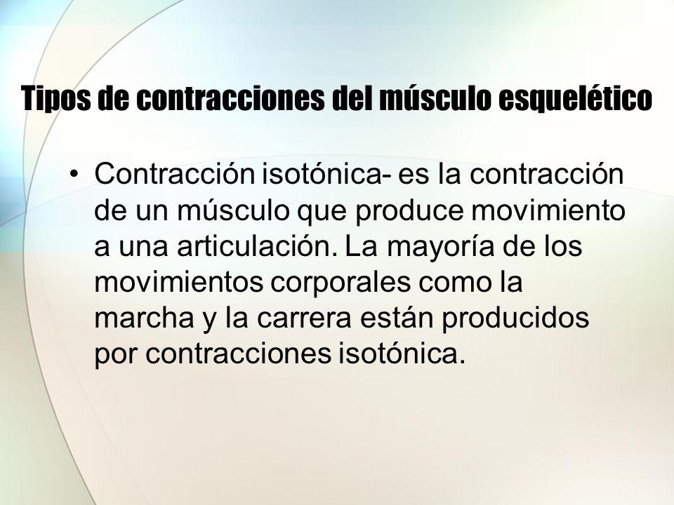 Tipos de contracciones del músculo esquelético