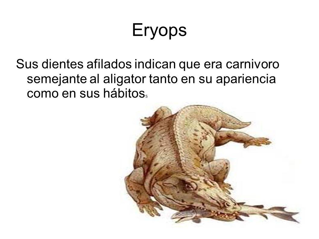 Eryops Sus dientes afilados indican que era carnivoro semejante al aligator tanto en su apariencia como en sus hábitoss.