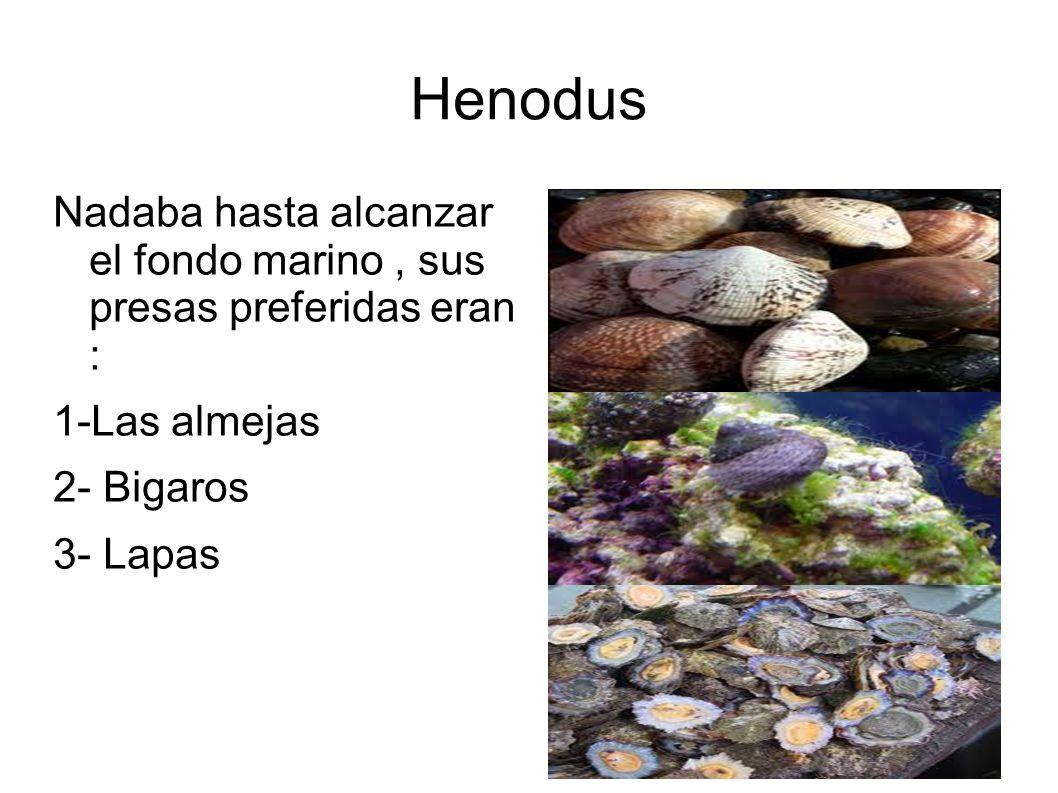 HenodusNadaba hasta alcanzar el fondo marino , sus presas preferidas eran : 1-Las almejas. 2- Bigaros.