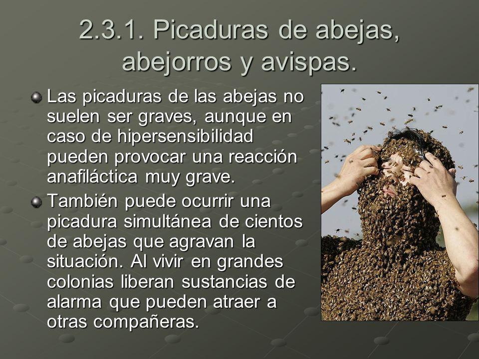 2.3.1. Picaduras de abejas, abejorros y avispas.