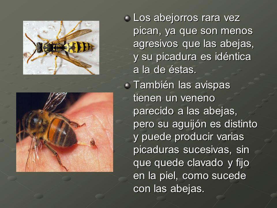Los abejorros rara vez pican, ya que son menos agresivos que las abejas, y su picadura es idéntica a la de éstas.