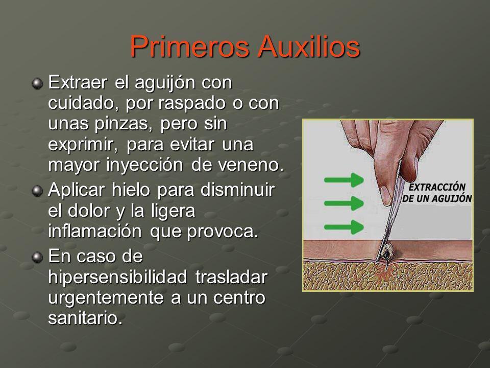Primeros AuxiliosExtraer el aguijón con cuidado, por raspado o con unas pinzas, pero sin exprimir, para evitar una mayor inyección de veneno.