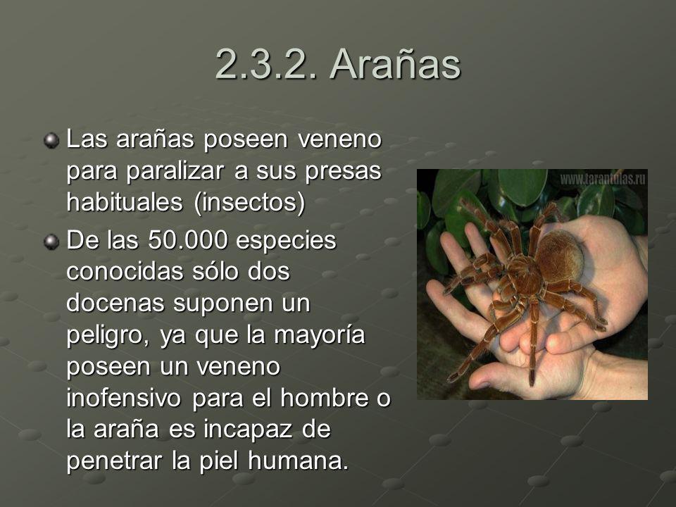 2.3.2. Arañas Las arañas poseen veneno para paralizar a sus presas habituales (insectos)