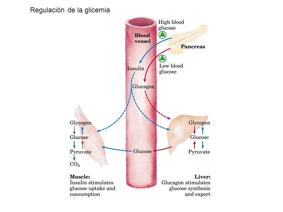 Integración del Metabolismo energético - ppt video online