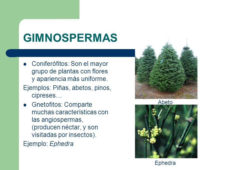 El reino de las plantas ppt video online descargar - Cuales son las plantas con flores ...