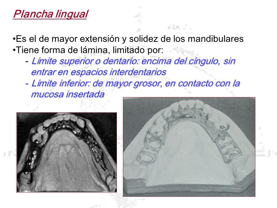Plancha lingual Es el de mayor extensión y solidez de los mandibulares