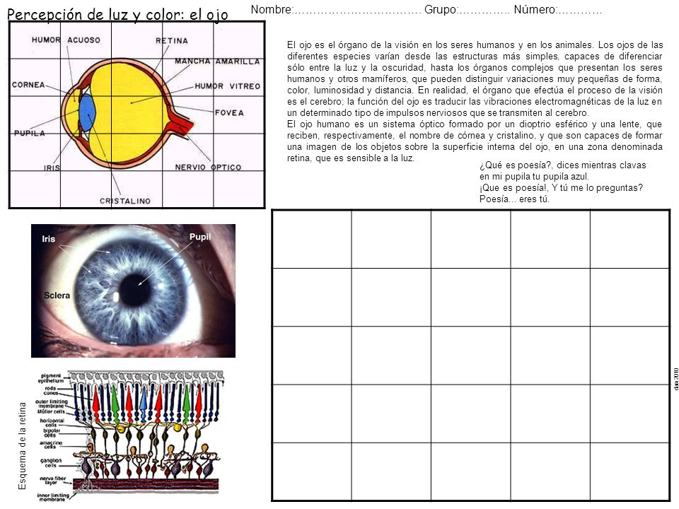 Percepción de luz y color: el ojo