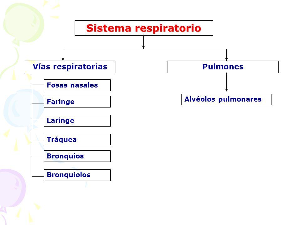 Sistema respiratorio Vías respiratorias Pulmones Fosas nasales