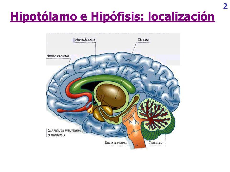 Perfecto Ubicación De La Glándula Pituitaria Patrón - Anatomía de ...