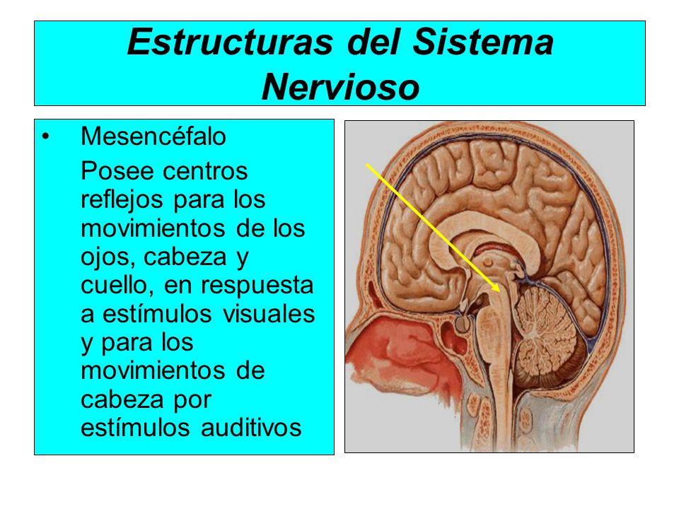 SISTEMA NERVIOSO Departamento de Biología Prof: M Valdebenito - ppt ...