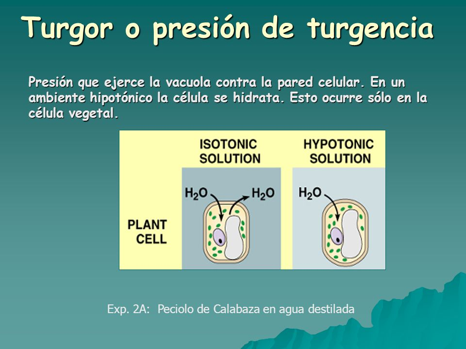 Difusi n osmosis y di lisis ppt video online descargar for Que es la osmosis del agua