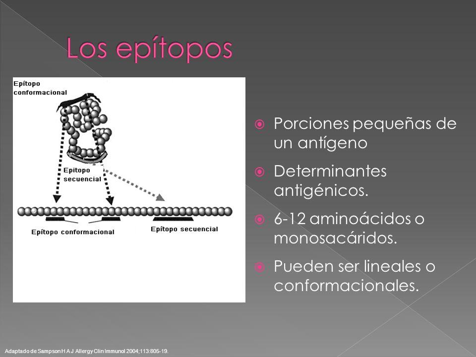 Los epítopos Porciones pequeñas de un antígeno