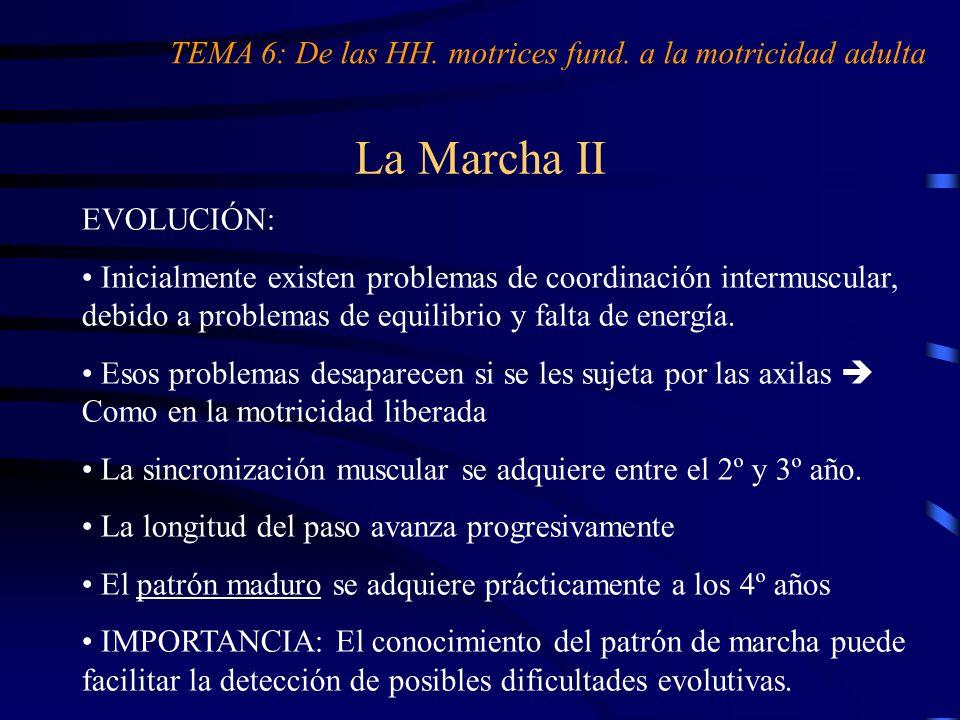 La Marcha II TEMA 6: De las HH. motrices fund. a la motricidad adulta