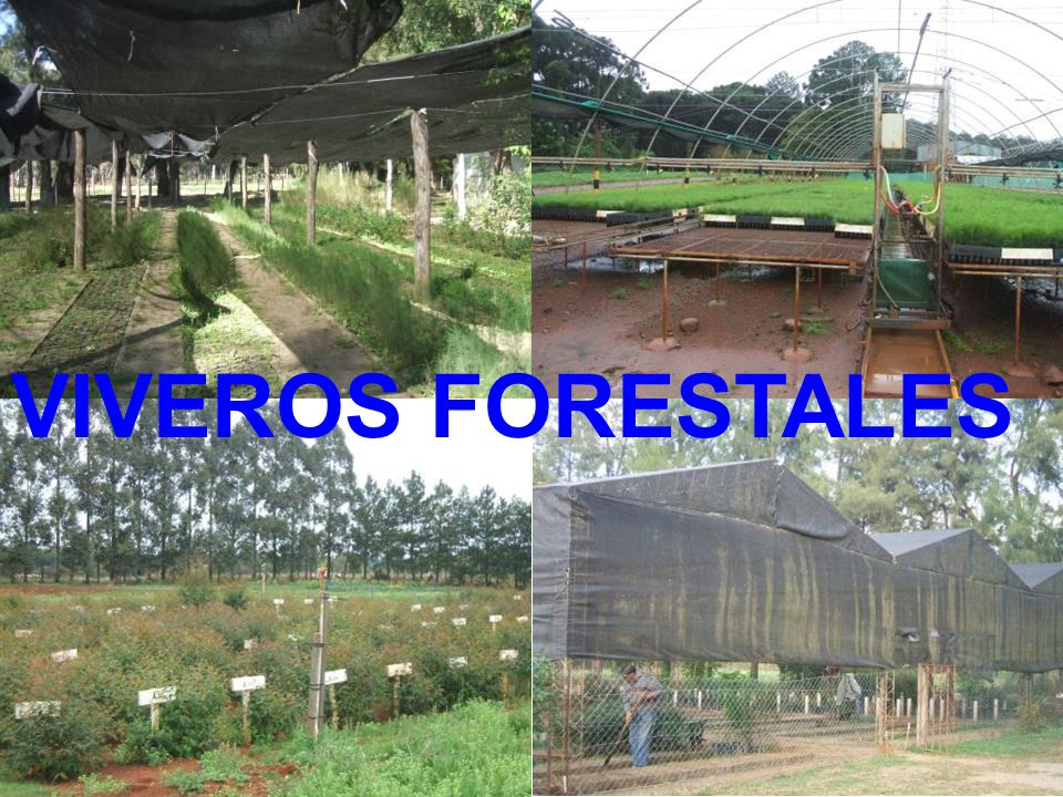 viveros forestales ppt descargar On diseno de un vivero forestal