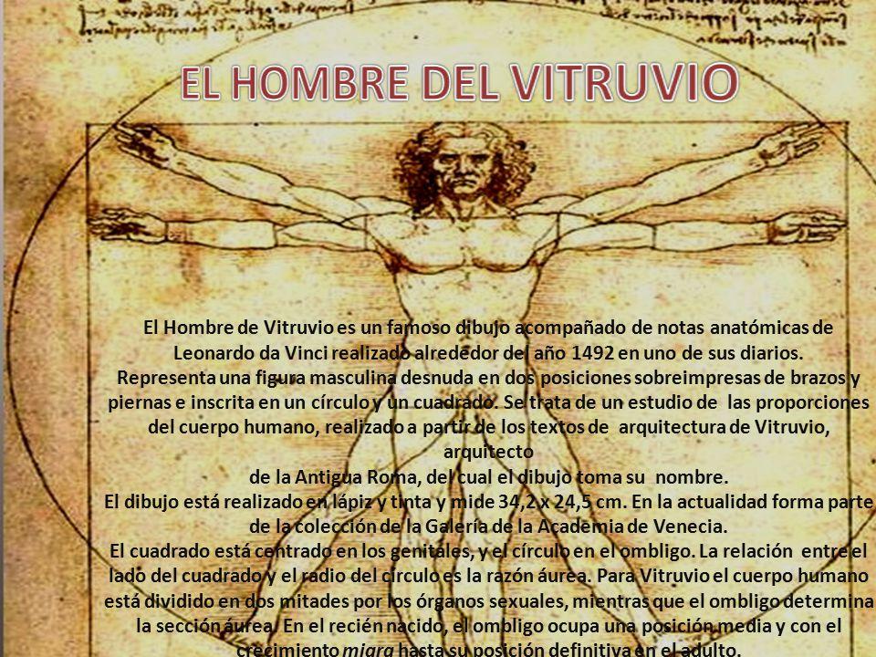 Atractivo Da Vinci Dibujo De Anatomía Viñeta - Imágenes de Anatomía ...