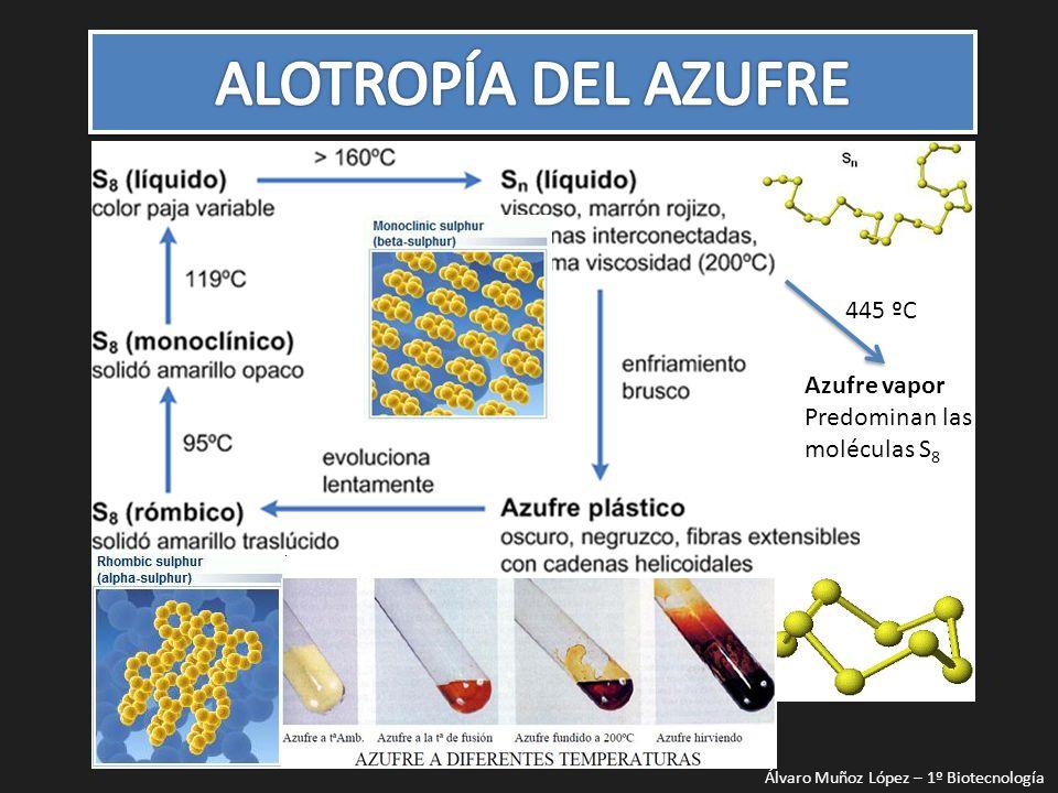 ALOTROPÍA DEL AZUFRE 445 ºC Azufre vapor Predominan las moléculas S8