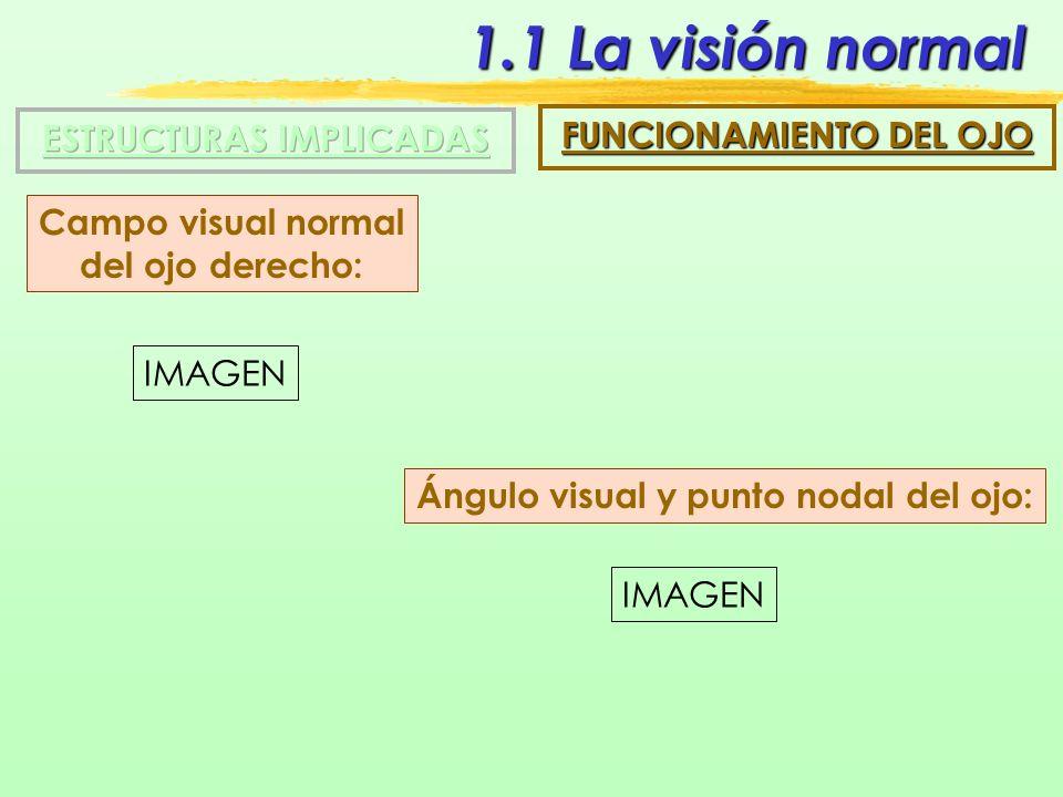 1.1 La visión normal ESTRUCTURAS IMPLICADAS FUNCIONAMIENTO DEL OJO