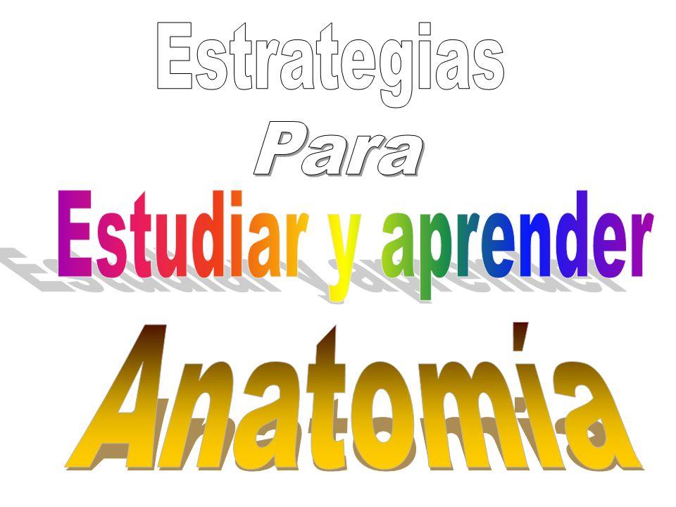 Encantador Manera Fácil De Aprender Anatomía Y Fisiología Adorno ...