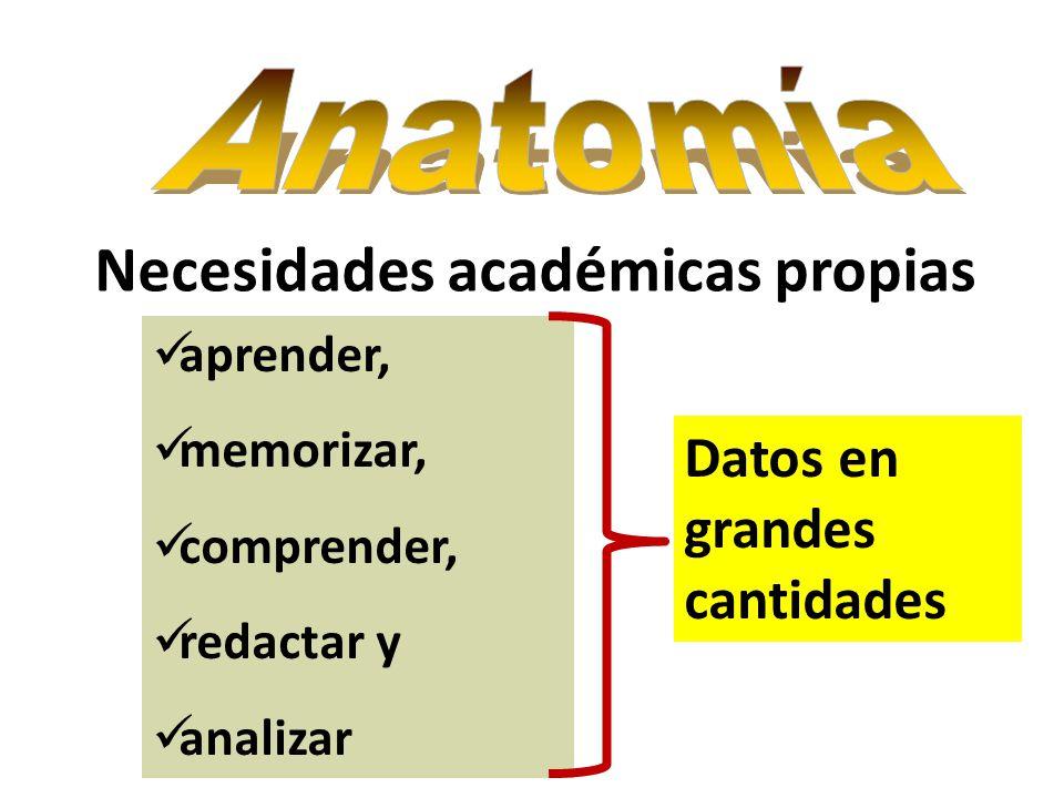 Hermosa Mejor Manera De Memorizar La Anatomía Elaboración - Anatomía ...
