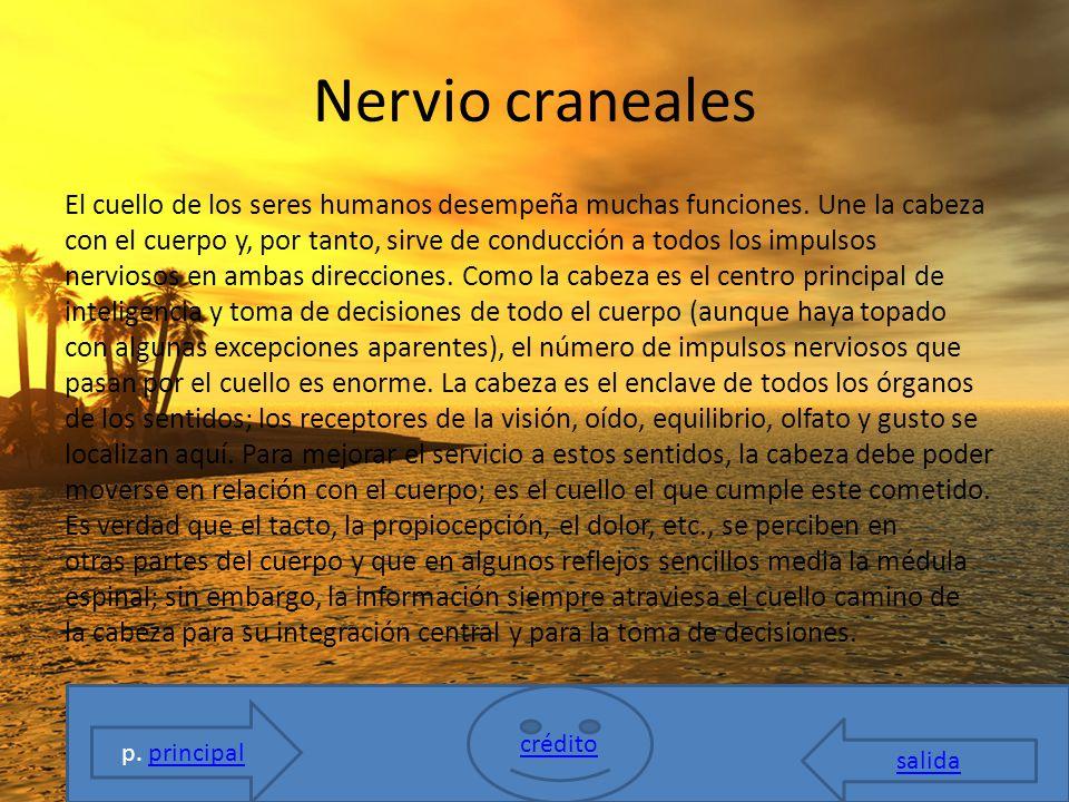 SISTEMA NERVIOSO crédito salida CEREBRO NERVIO CRANEALES - ppt descargar