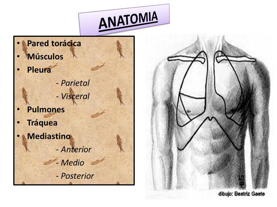 Lujo Anatomía De Salida Torácica Inspiración - Imágenes de Anatomía ...