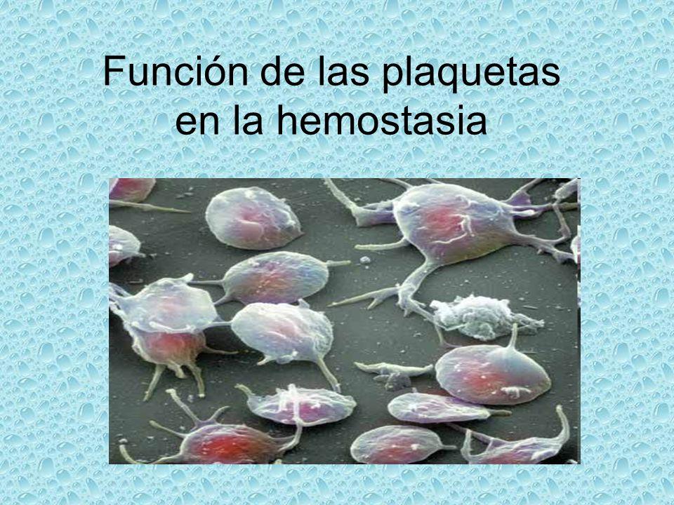 Función de las plaquetas en la hemostasia