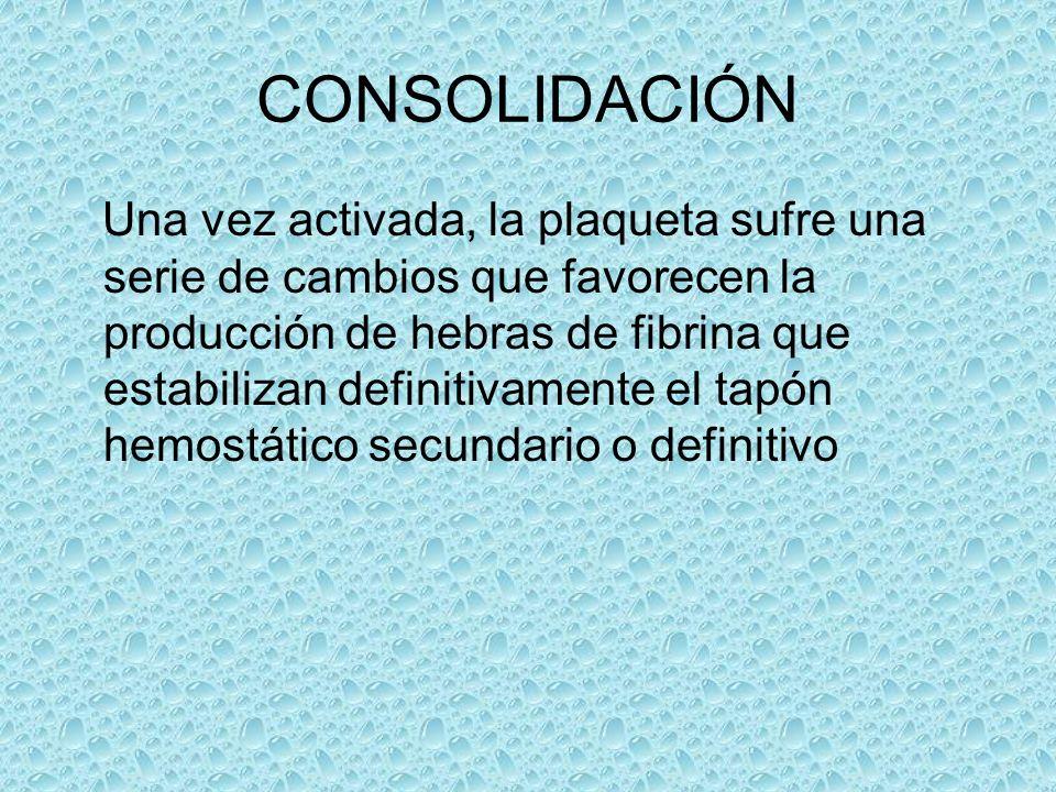 CONSOLIDACIÓN