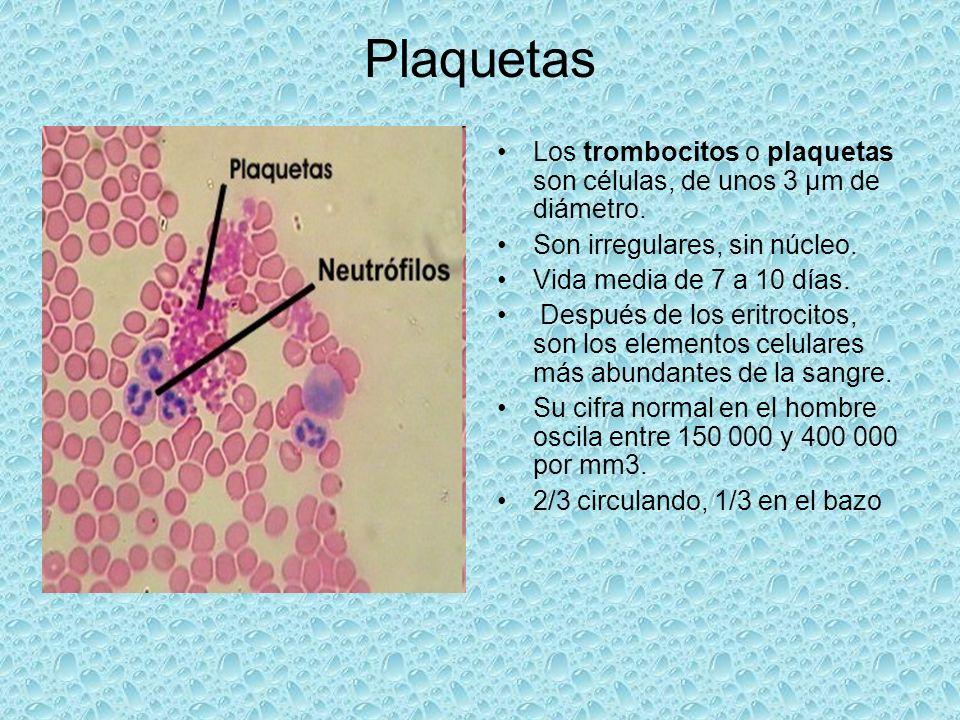 Plaquetas Los trombocitos o plaquetas son células, de unos 3 µm de diámetro. Son irregulares, sin núcleo.