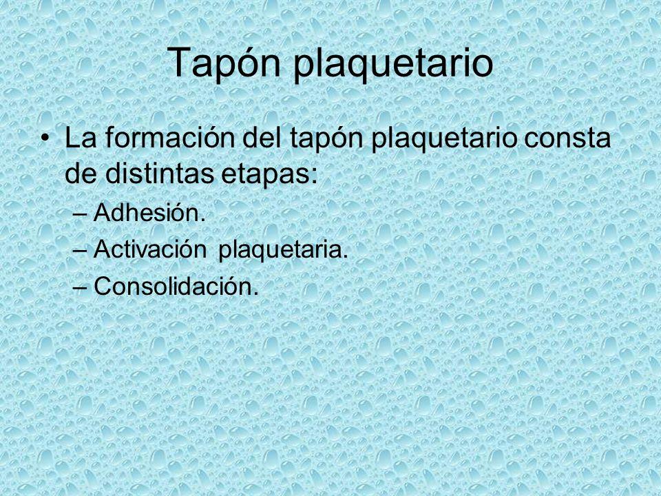 Tapón plaquetario La formación del tapón plaquetario consta de distintas etapas: Adhesión. Activación plaquetaria.