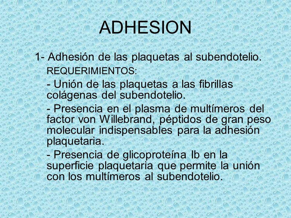 ADHESION 1- Adhesión de las plaquetas al subendotelio. REQUERIMIENTOS: