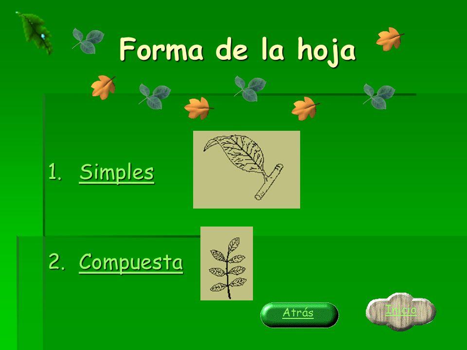 Forma de la hoja Simples Compuesta Inicio Atrás
