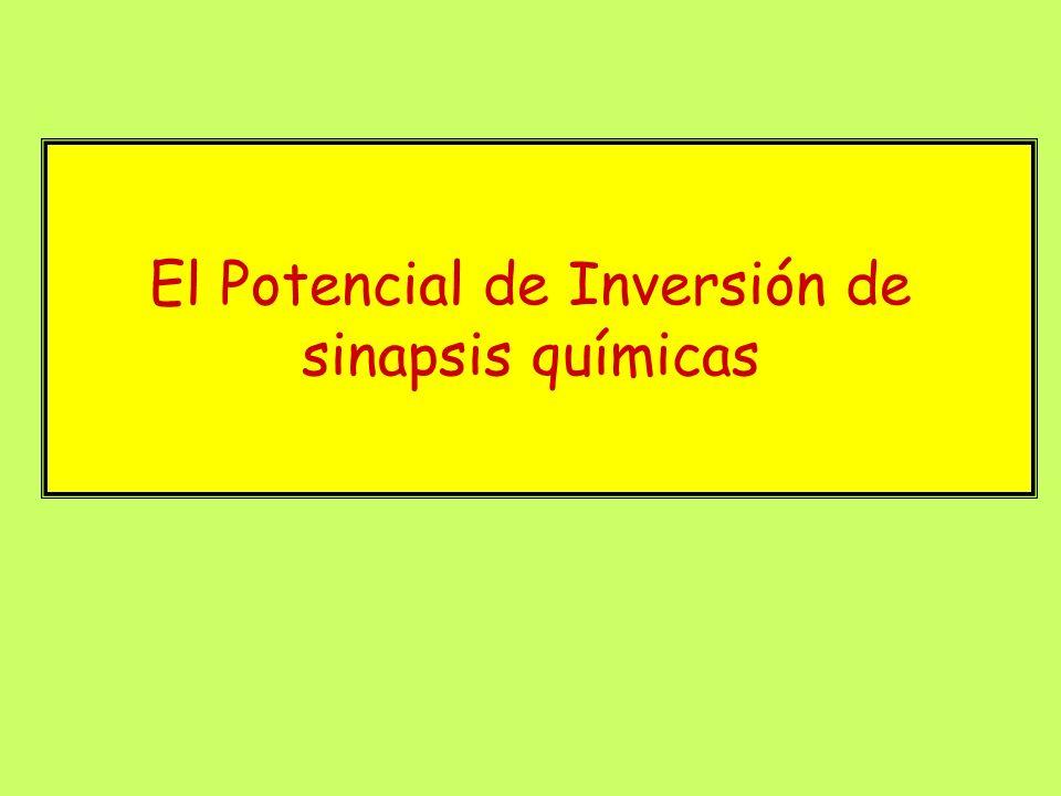 El Potencial de Inversión de sinapsis químicas