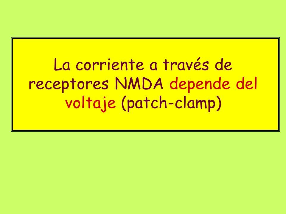 La corriente a través de receptores NMDA depende del voltaje (patch-clamp)