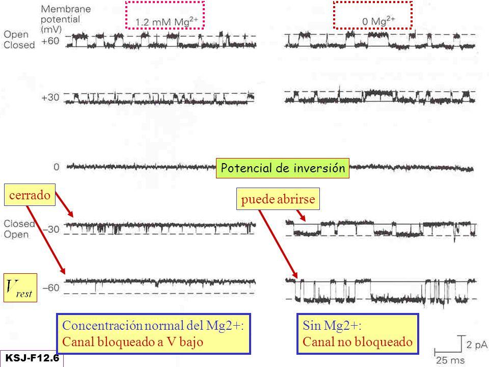 Concentración normal del Mg2+: Canal bloqueado a V bajo cerrado