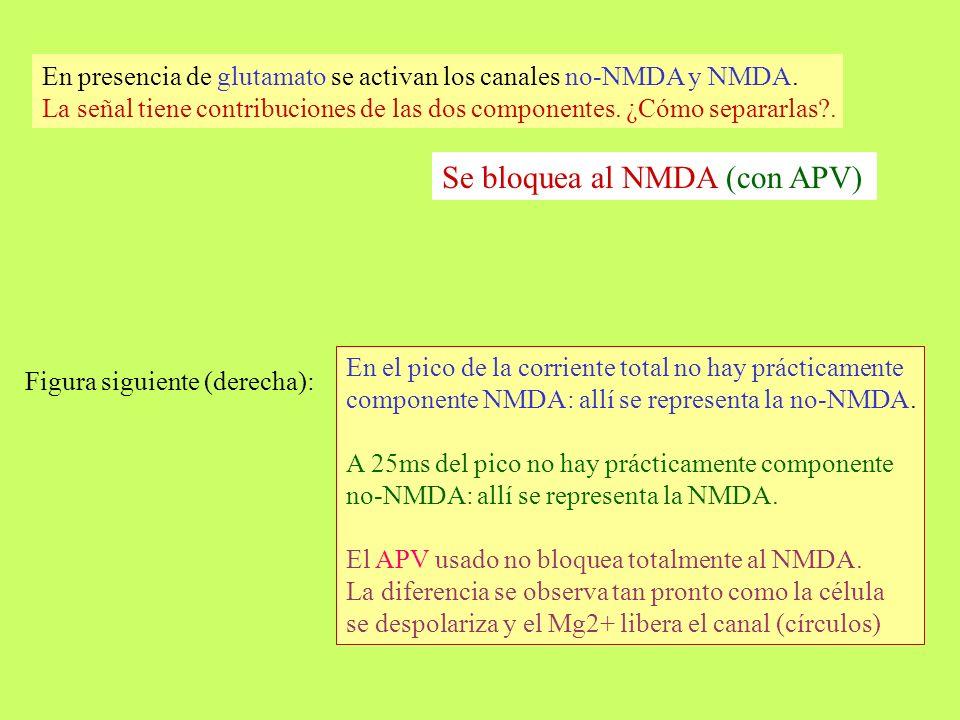 Se bloquea al NMDA (con APV)