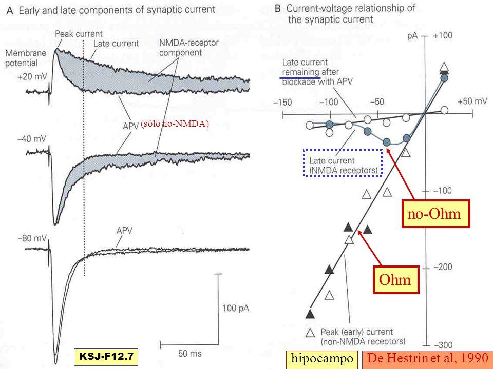 (sólo no-NMDA) no-Ohm Ohm KSJ-F12.7 hipocampo De Hestrin et al, 1990