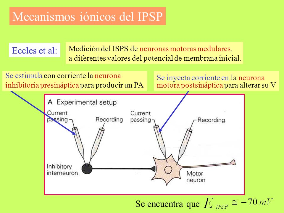 Mecanismos iónicos del IPSP