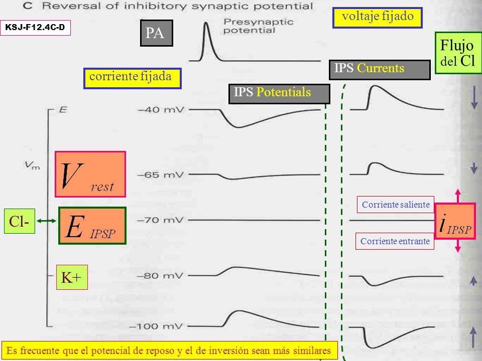PA Flujo Cl- K+ voltaje fijado del Cl IPS Currents corriente fijada