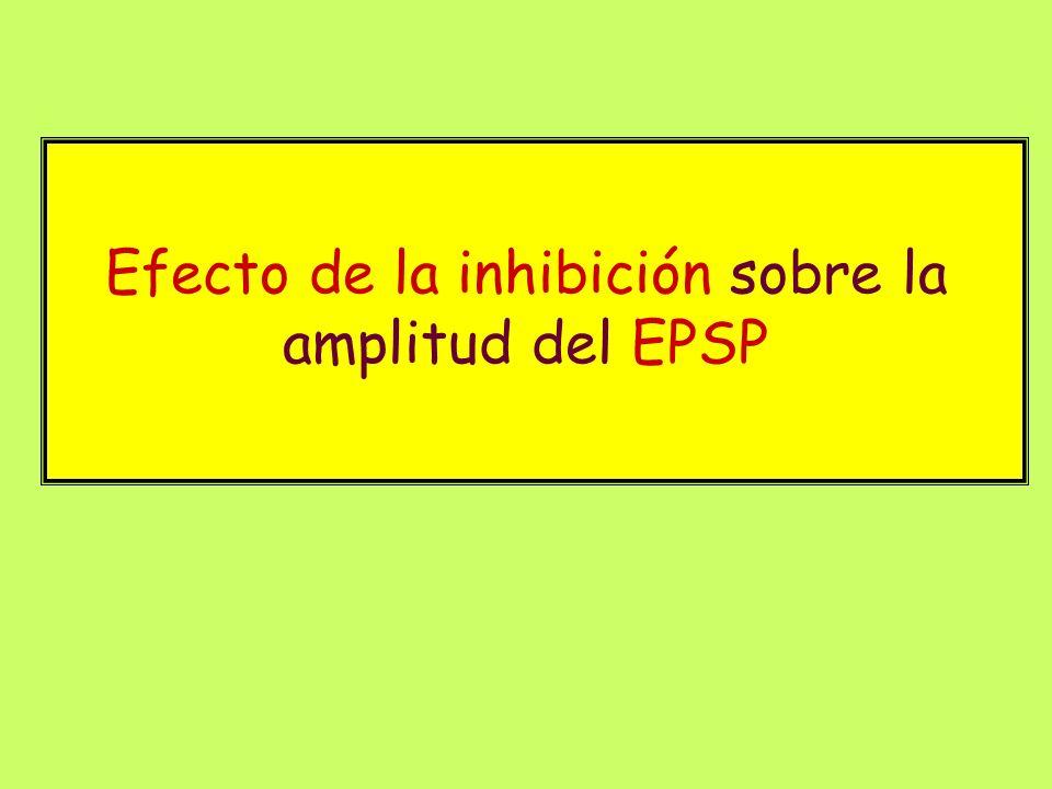 Efecto de la inhibición sobre la amplitud del EPSP