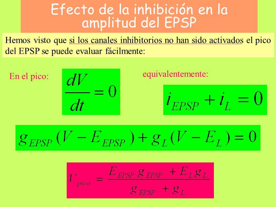 Efecto de la inhibición en la amplitud del EPSP