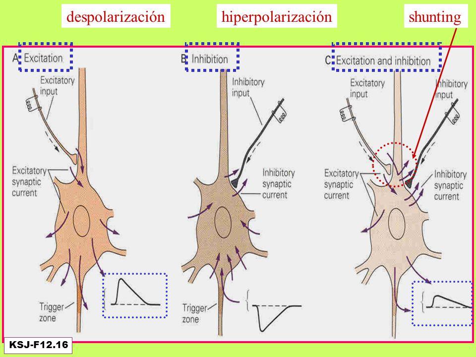 Efecto de la inhibición: neuronas