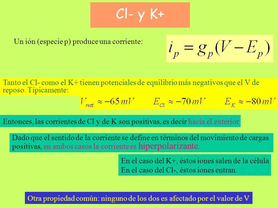 Cl- y K+ Cl- y K+ Un ión (especie p) produce una corriente: