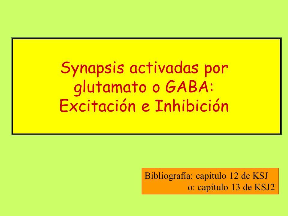 Synapsis activadas por glutamato o GABA: Excitación e Inhibición