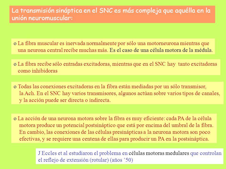 La transmisión sináptica en el SNC es más compleja que aquélla en la unión neuromuscular: